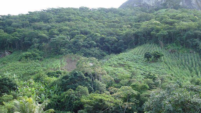 image Brésil